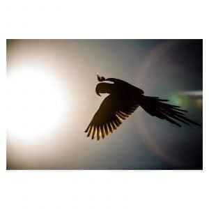 Blue Bird by Luiz Todeschi